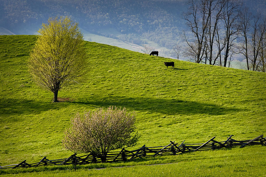 Mountain Pasture with Two Cows by John Pagliuca