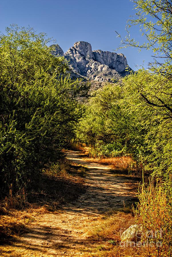 Mountain Path 27 Photograph