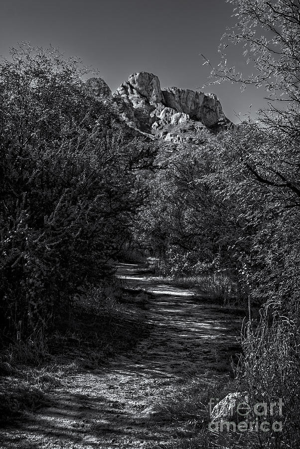 2011 Photograph - Mountain Path 28 by Mark Myhaver
