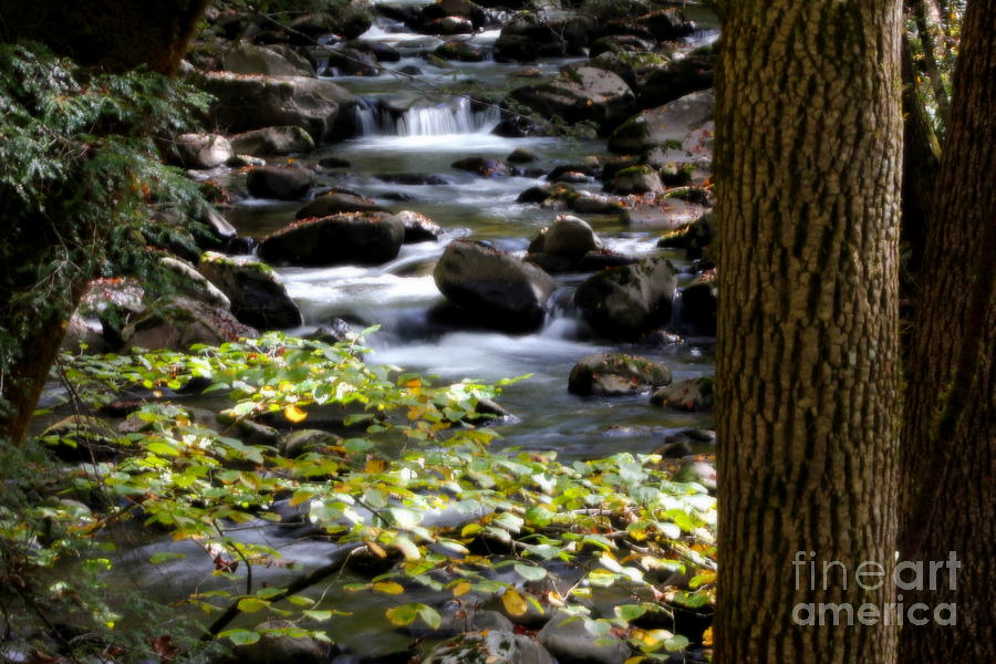 Mountain Stream by Cynthia Mask