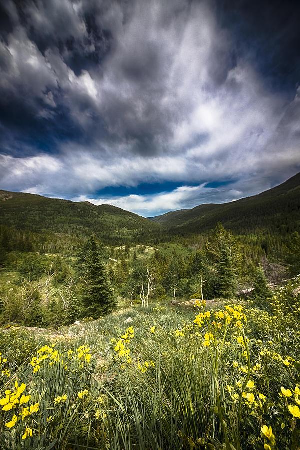 Wildflowers Photograph - Mountain Wildflowers by Garett Gabriel