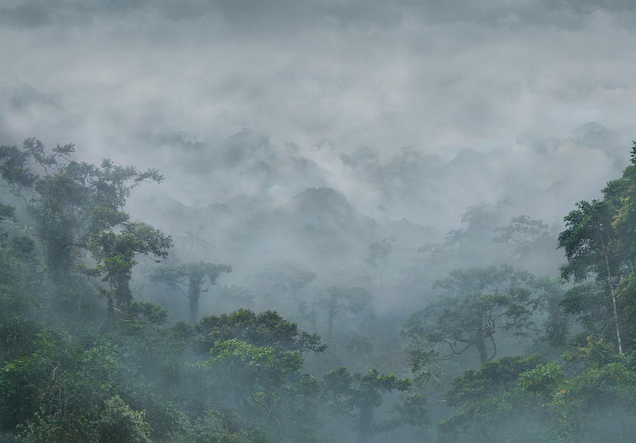 Mountains And Rainforest In Fog Photograph By Per Andre Hoffmann
