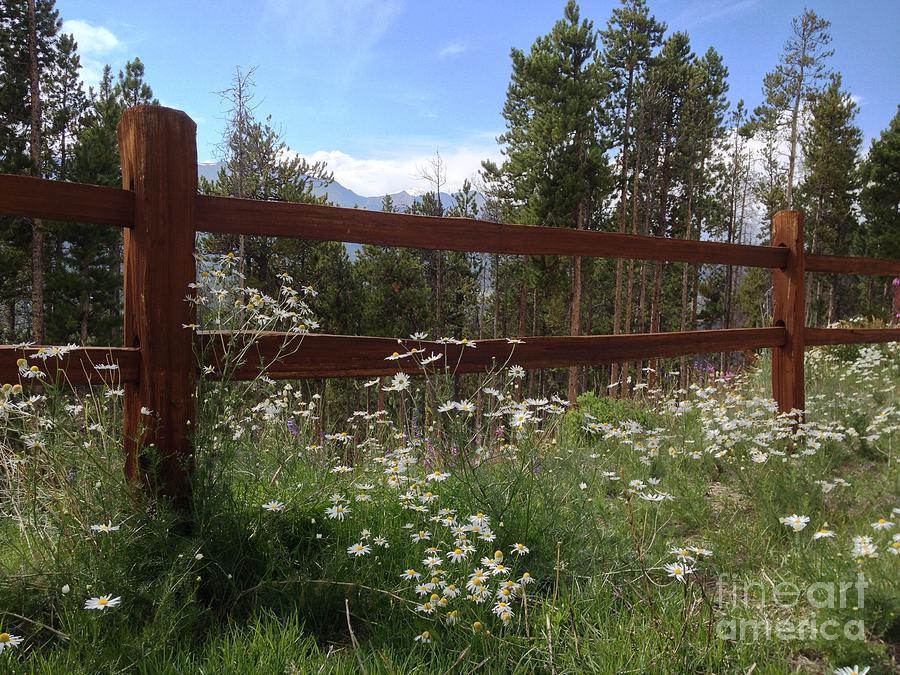 Colorado Photograph - Mountainside Lawn by Garren Zanker
