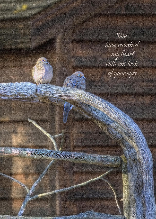 Doves Photograph - Mourning Doves by Cheryl Birkhead