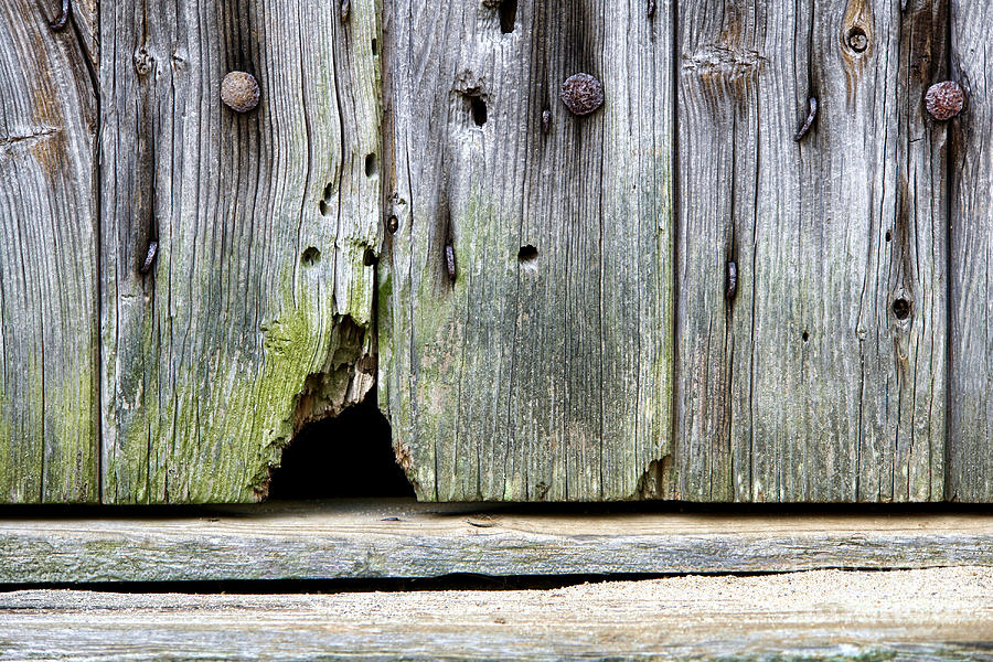 Mouse Photograph - Mouse Hole by Olivier Le Queinec