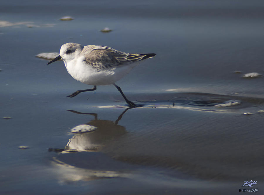 Sanderling Photograph - Move It by Kenneth Hadlock