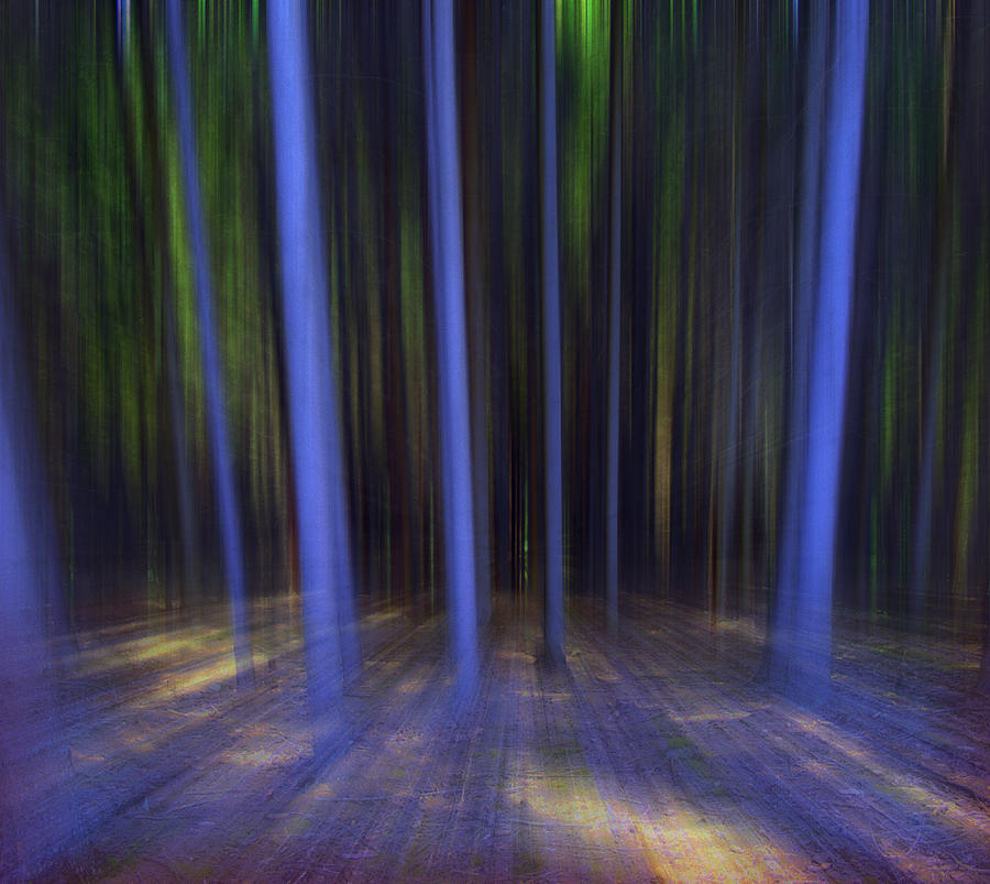 Abstract Photograph - Moving Forest by Florin Birjoveanu