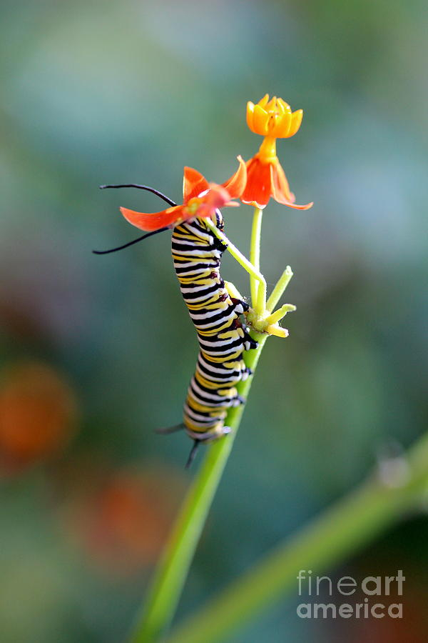 Caterpillar Photograph - Moving Mountains by Pamela Gail Torres