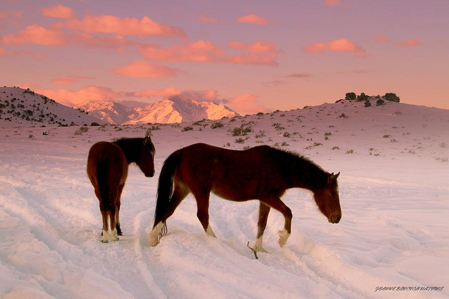 Wild Horses Photograph - Movng On  by Jeanne  Bencich-Nations