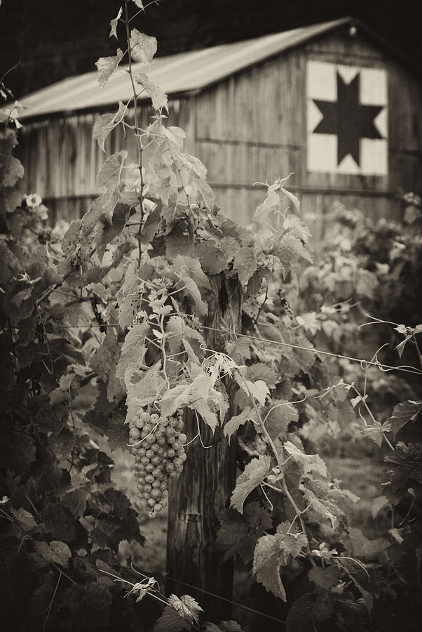 Moyer's Vines by Wayne Stacy