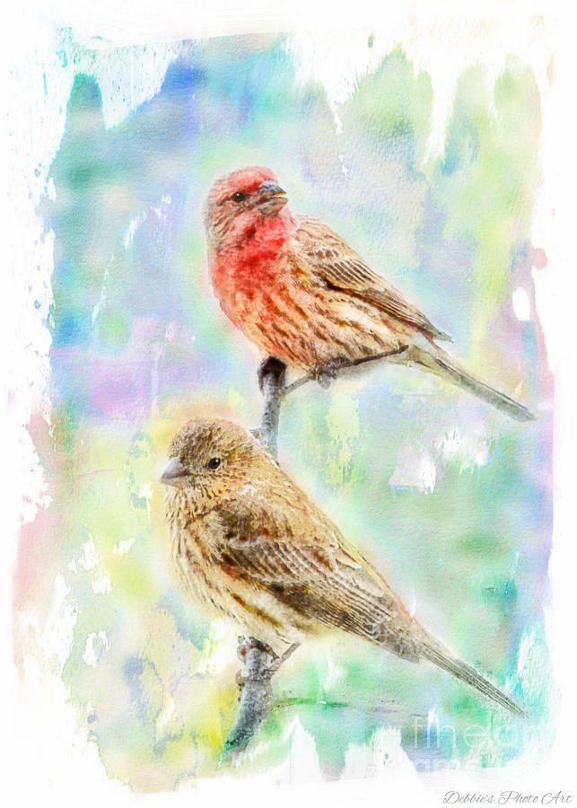 Finch Photograph - Mr And Mrs House Finch - Digital Paint by Debbie Portwood