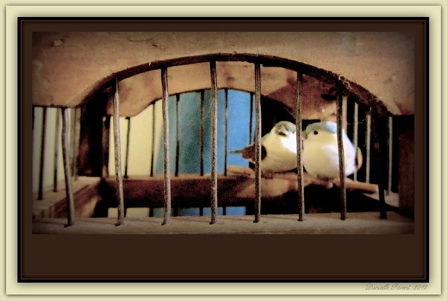 Sepia Color Art Prints Photograph - Mr. And Mrs Tweety In Sepia  by Danielle  Parent