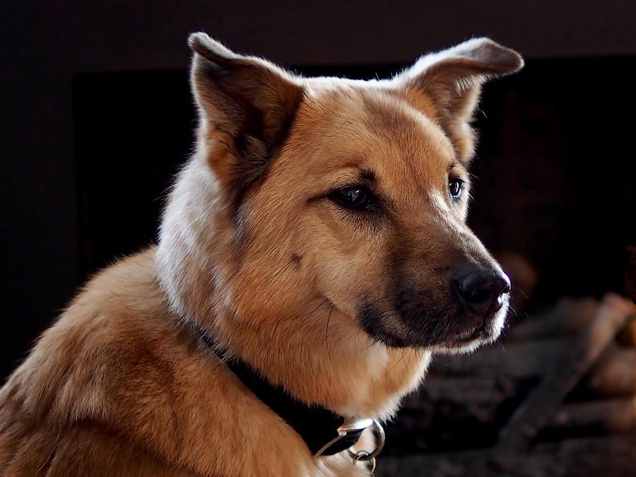 Dog Photograph - Mr. Charlie by Rona Black