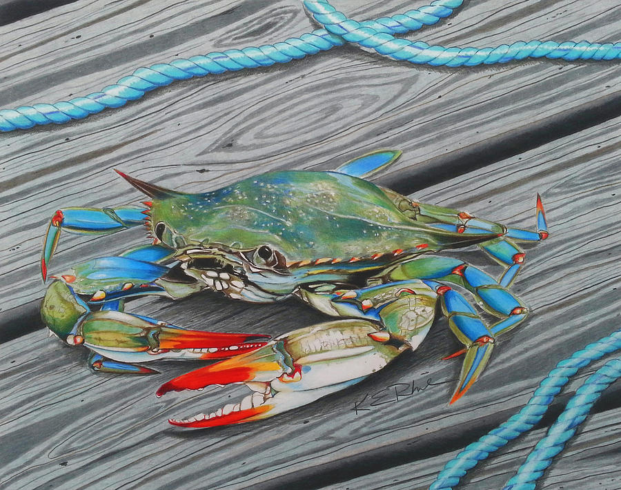 Crab Drawing - Mr. Jimmy by Karen Rhodes