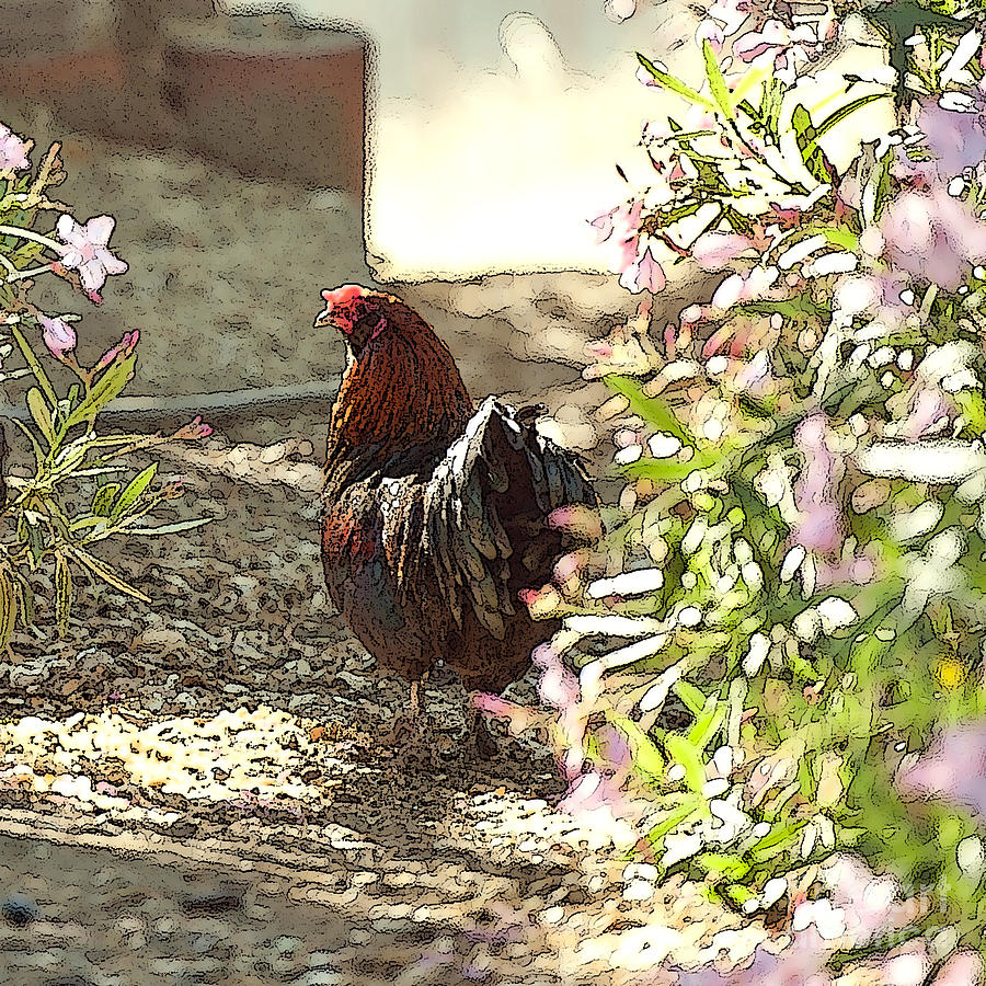 Chickens Painting - Mr. Rooster Takes A Stroll by Artist and Photographer Laura Wrede