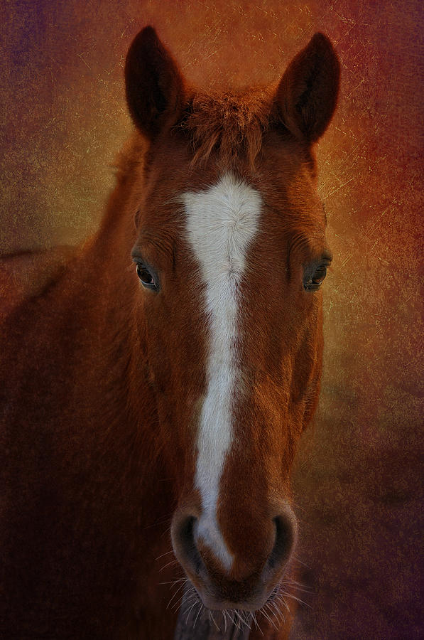 Horse Photograph - Mr. Whiskers by Liz Mackney