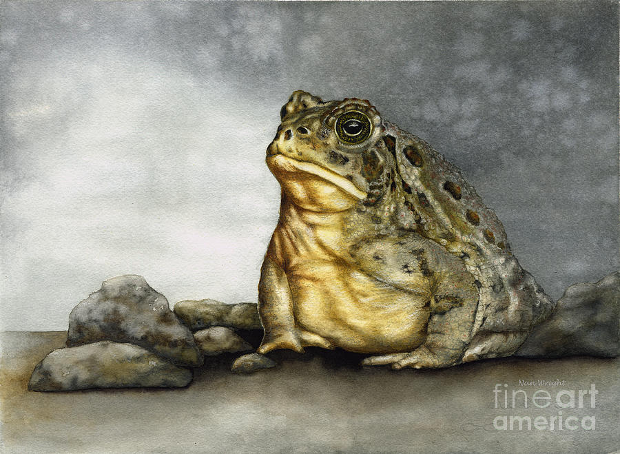 Nan Wright Painting - Mr. Woodhouse Toad by Nan Wright