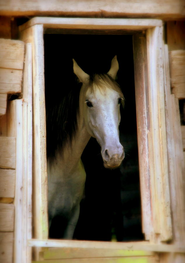 White Horse Photograph - Mrs. Ed by Karen Wiles