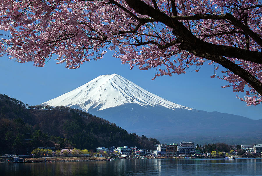Mt Fuji And Cherry Blossom Photograph by Mantaphoto