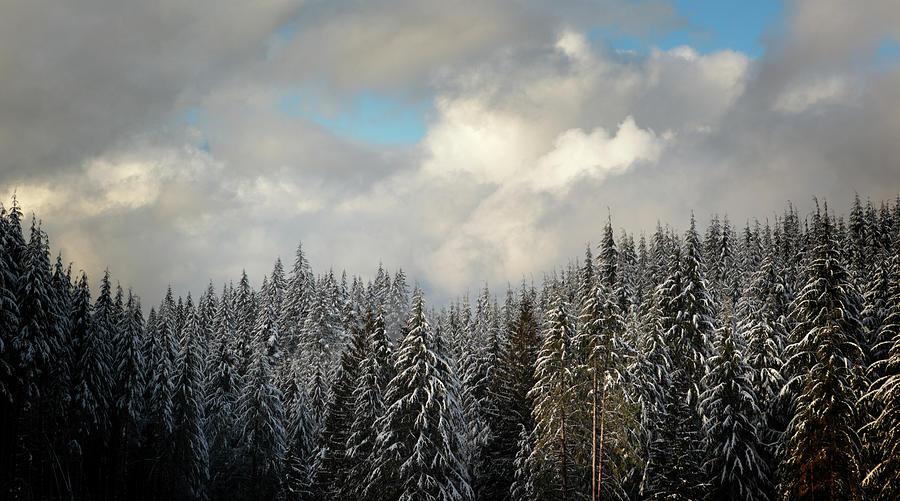 Mt Hood Forest Oregon Photograph by Davealan