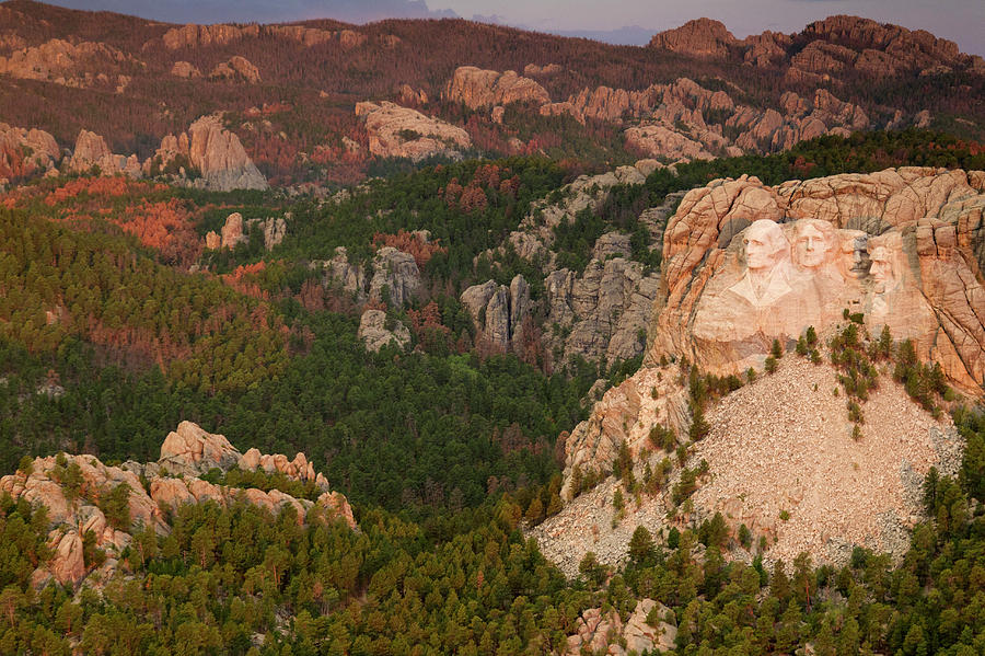 Usa Photograph - Mt. Rushmore With Beetlekill Ponderosa by Peter Essick
