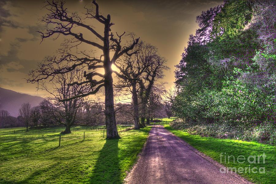 Trees Photograph Photograph - Muckross Park Kerry Ireland by Jo Collins