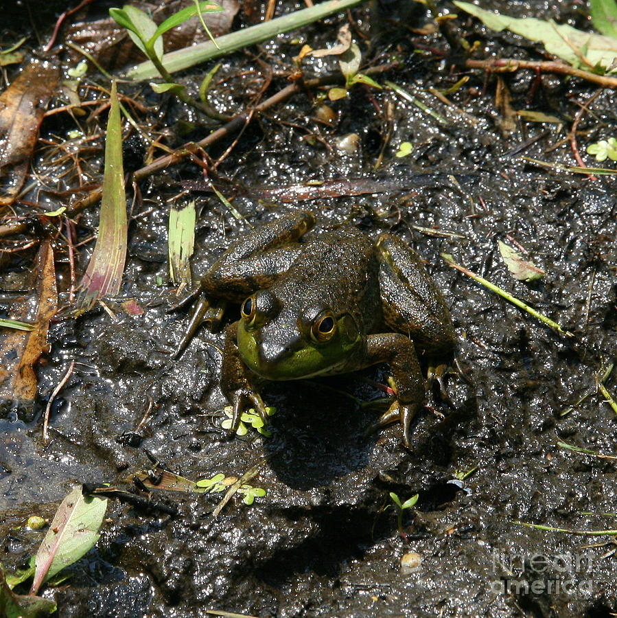 Frog Photograph - Mud Bath by Neal Eslinger