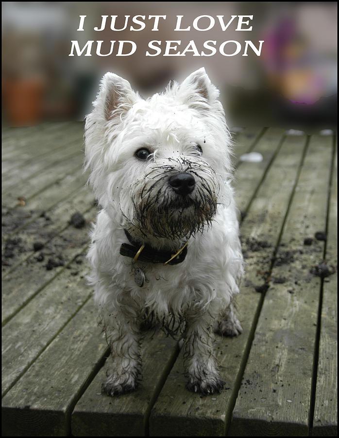 MUD SEASON by Geraldine Alexander