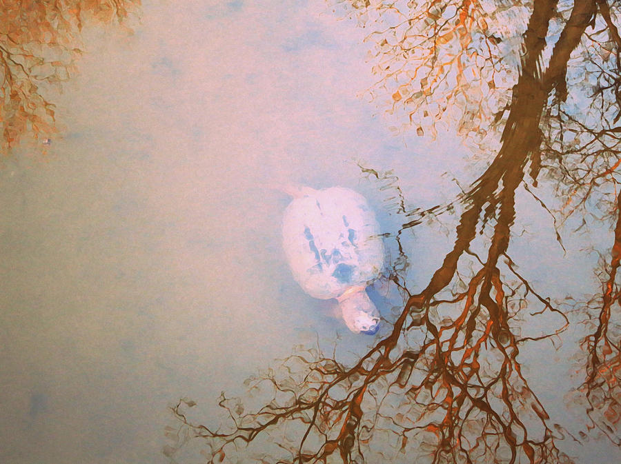 Turtle Photograph - Muddy Spring Turtle by Patricia Januszkiewicz