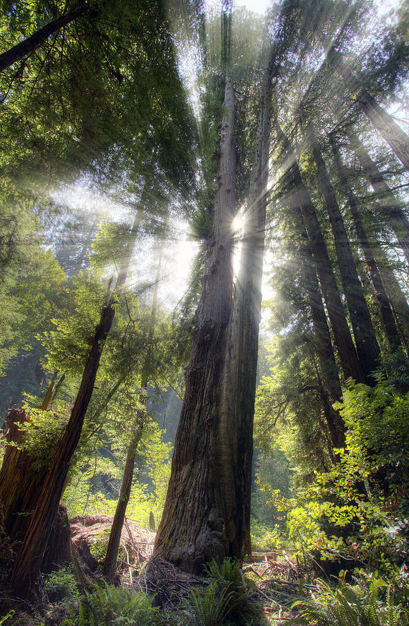 Muir Woods Photograph - Muir Woods Afternoon Sun by Shawn Everhart