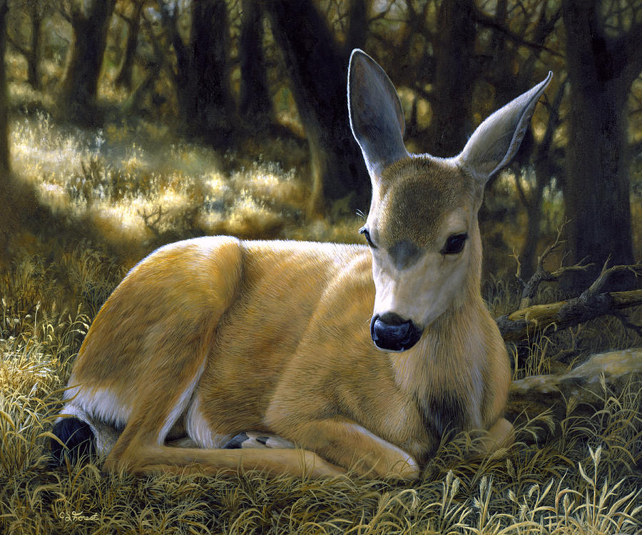 Deer Painting - Mule Deer Fawn - A Quiet Place by Crista Forest