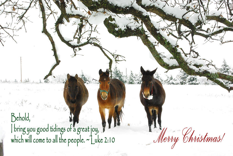Image result for images of mules at christmas