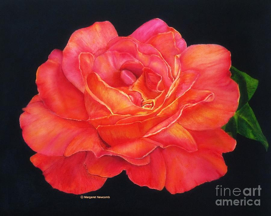 Multi colored rose oils on canvas print photograph by for Pictures of multi colored roses