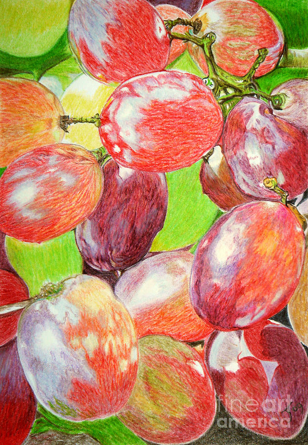 Wine Grapes Drawing - Multi Coloured Grapes by Yvonne Johnstone
