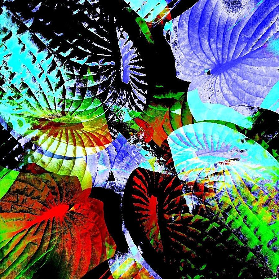 Multi-colour Photograph - Multi Hosta by Stephanie Aarons