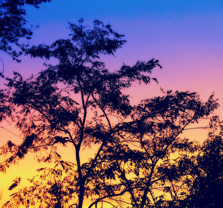 Sunset Photograph - Multicolored Sunset by Candice Trimble