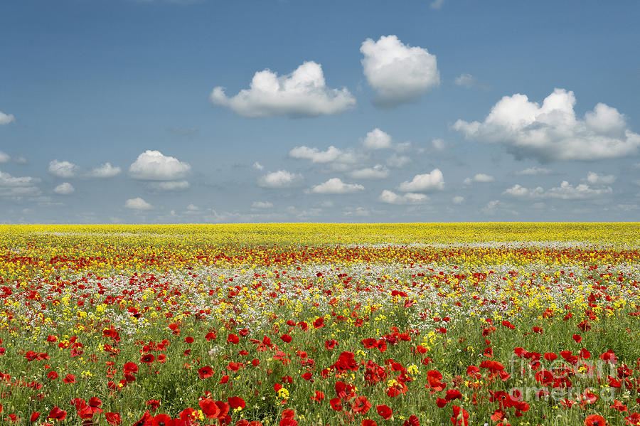 Oxfordshire Photograph - Multicoloured Field by Tim Gainey