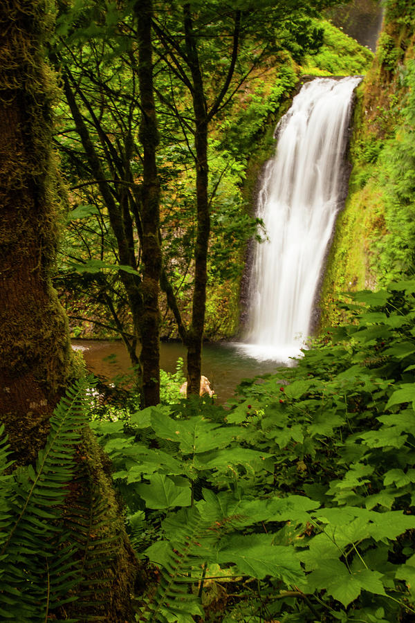 Multnomah Falls, Scenic Of Waterfall Photograph by Danita Delimont