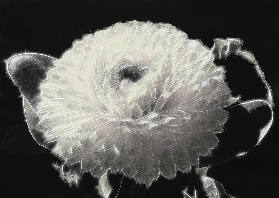 Chrysanthemum Photograph - Mumsy by Wendy J St Christopher