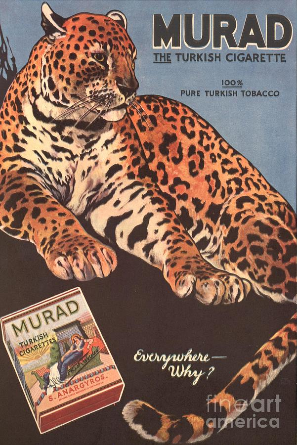 1910s Drawing - Murad 1910s Usa Cigarettes Smoking by The Advertising Archives