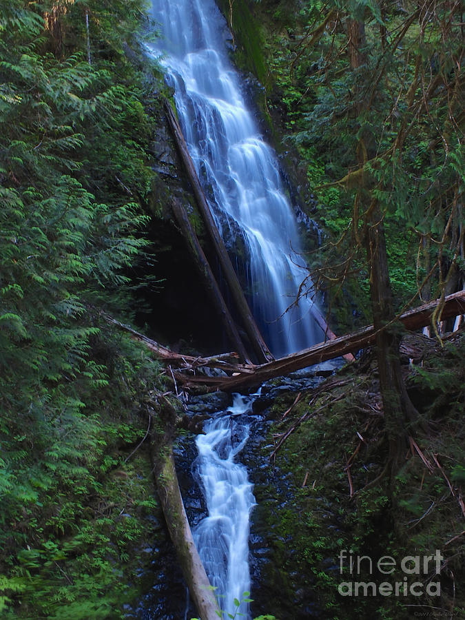 Olympic National Park Photograph - Murhut Falls by Heike Ward