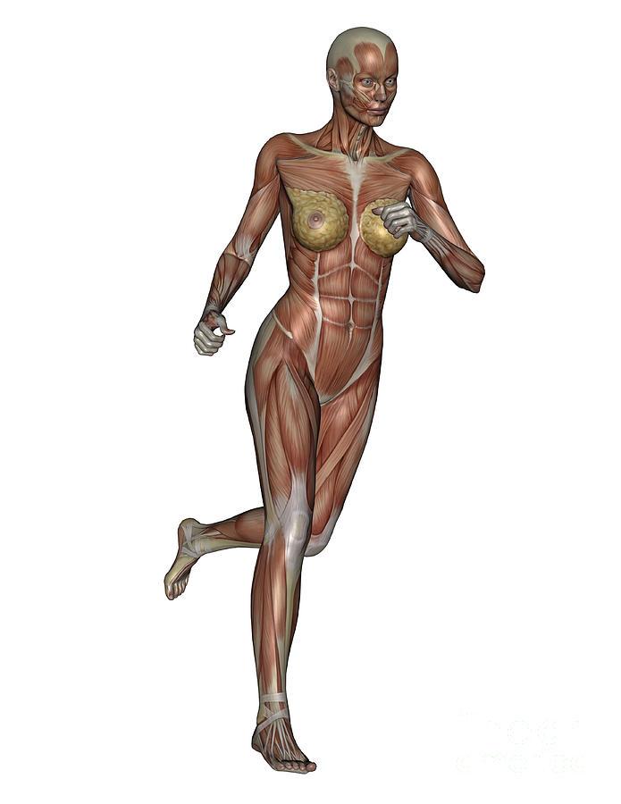 Muscle Digital Art - Muscular Woman Running by Elena Duvernay