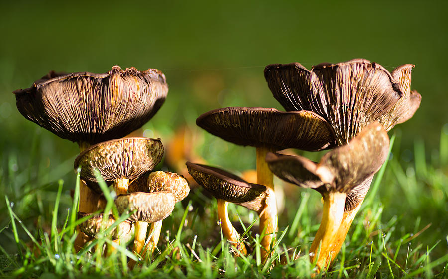 Mushroom time Photograph by Pedro Nunez