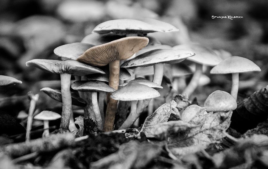 Nature Photograph - Mushrooms by Stwayne Keubrick