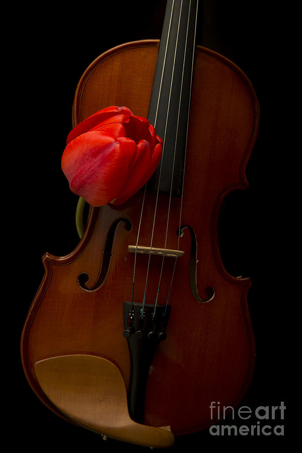 Floral Photograph - Music Lover by Edward Fielding