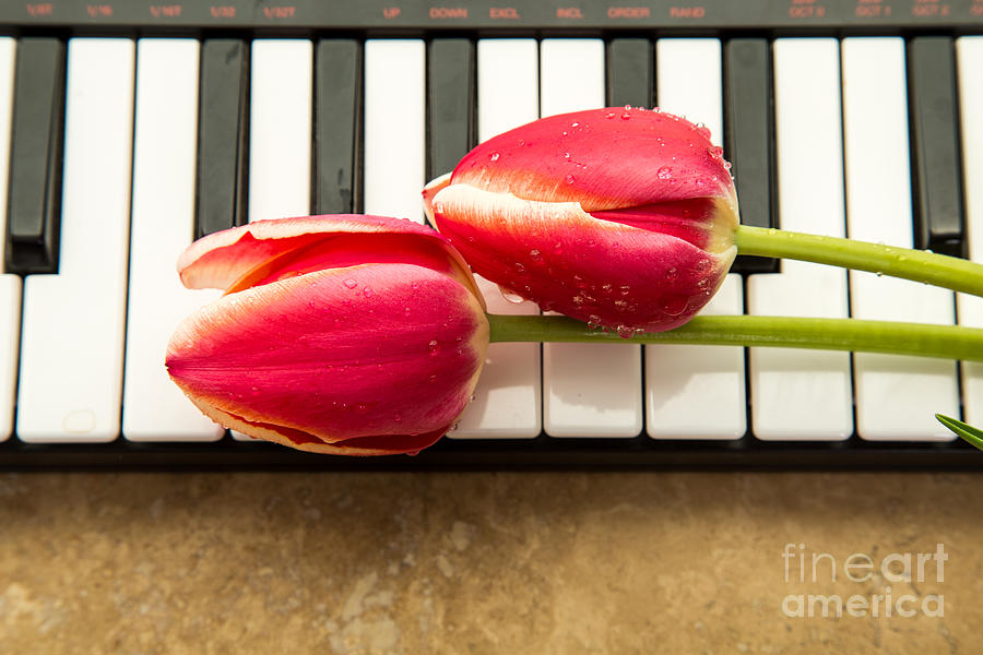 Floral Photograph - Musical Interlude by Edward Fielding