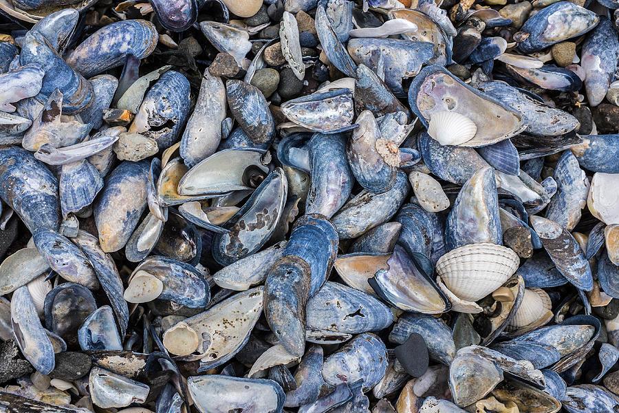 Mussel Beach Photograph