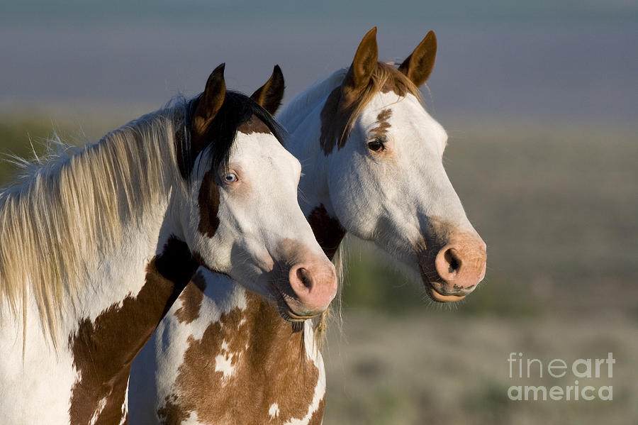 Horse Photograph - Mustang Mare And Son by Jean-Louis Klein and Marie-Luce Hubert
