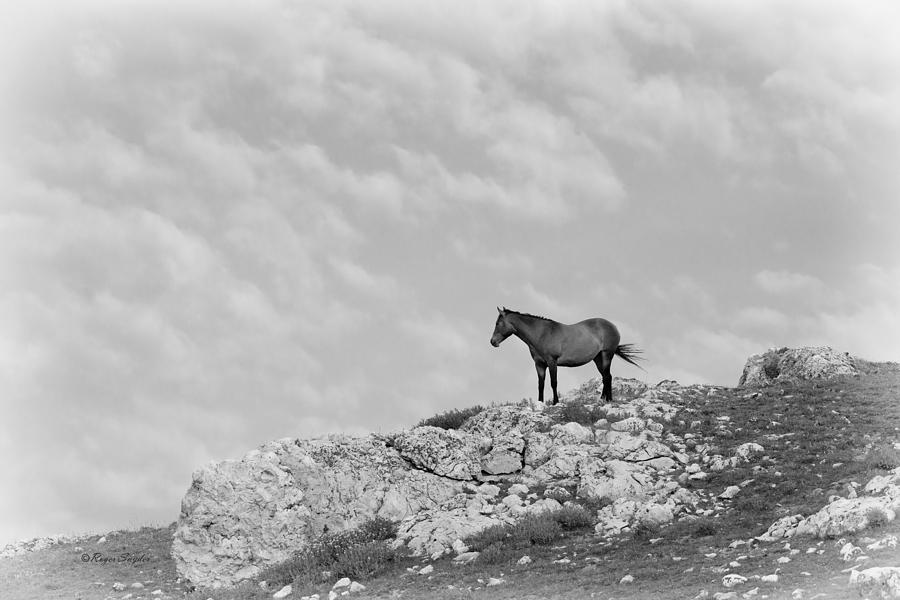 Beautiful Photograph - Mustang On Hill 1 Bw by Roger Snyder