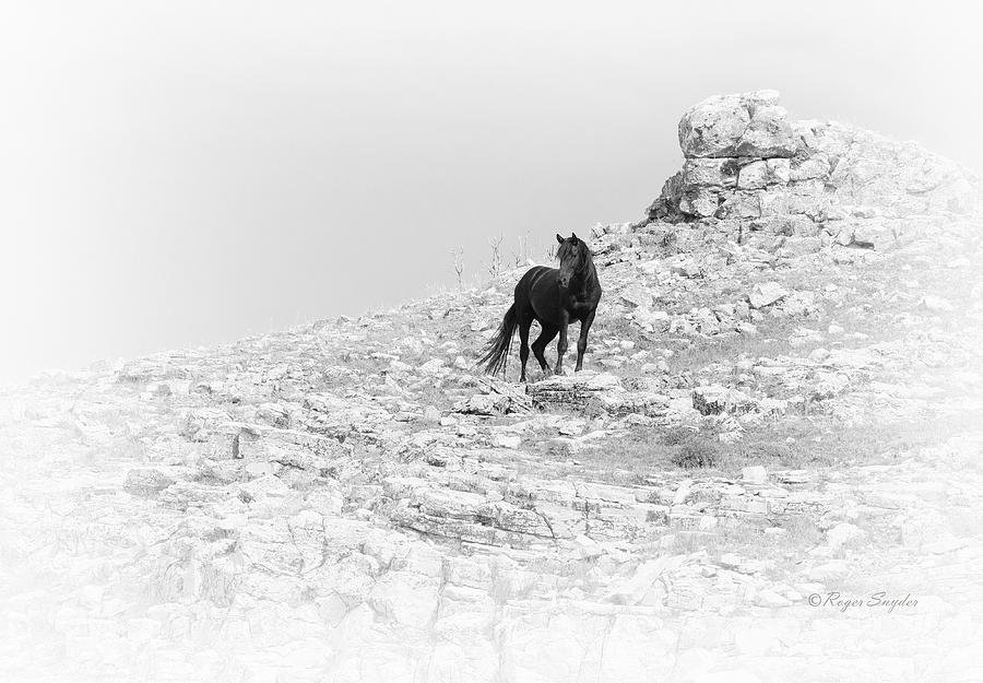 Beautiful Photograph - Mustang On Hill 2 Bw by Roger Snyder